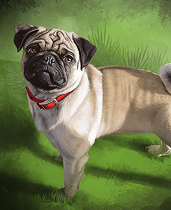 Custom Pug Portrait